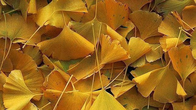 Por Que Las Hojas De Los Arboles Cambian De Color En Otono Abces - Hojas-de-arboles