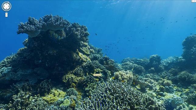 Fondo de mar gif - Imagui