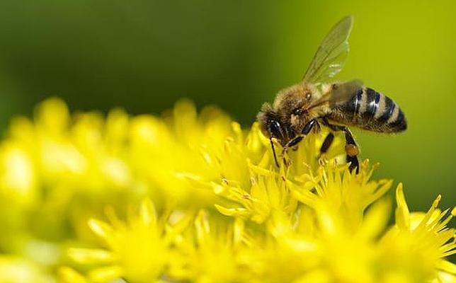La primera abeja robótica perfecta