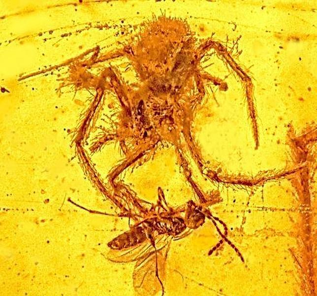 El ataque de la araña de hace 100 millones de años