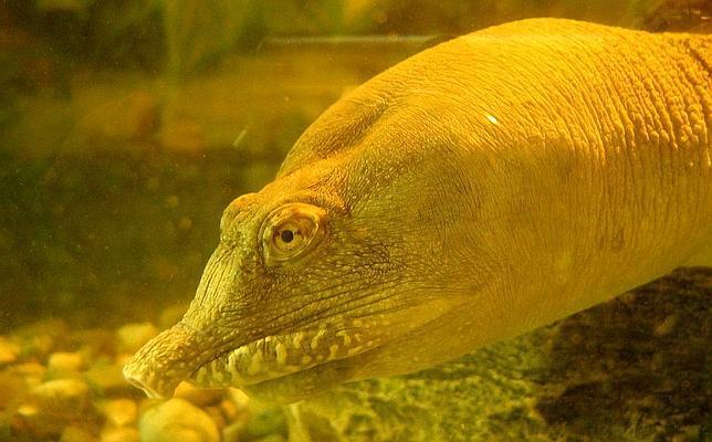 La tortuga que orina por la boca