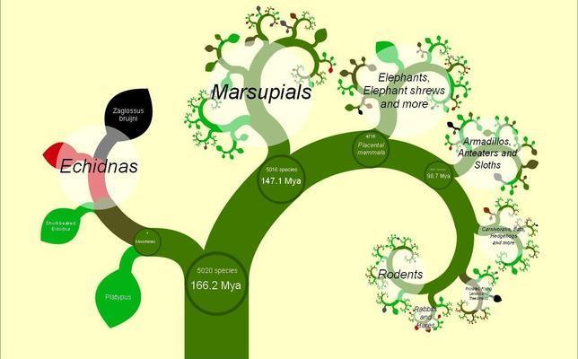 El primer árbol de la vida en internet