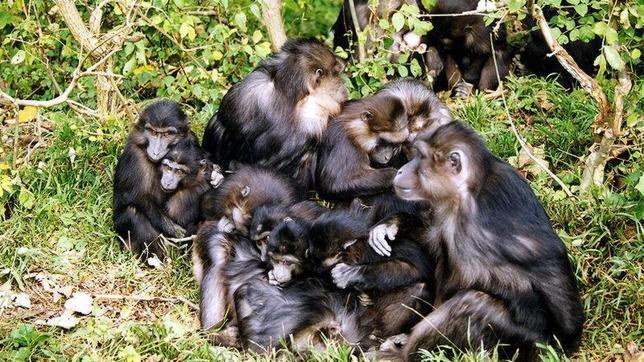 Se trata de una acción que se enmarca dentro de la campaña de la Ong animalista contra el uso de animales en experimentos científicos