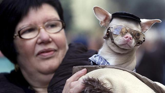 Diez ideas para tener mascota y no morir económicamente en el intento
