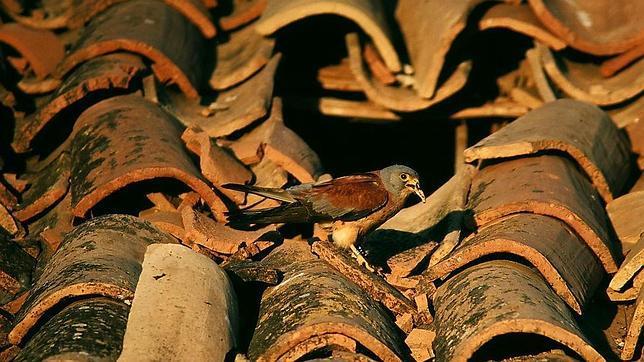 Los mejores espacios naturales de España para ver aves
