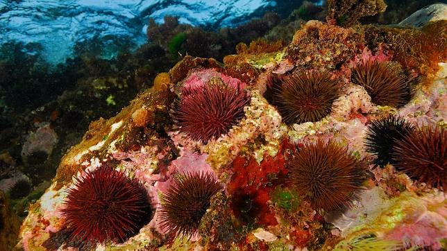buceo sostenible   Buceo sostenible con Posidonia Ecosports