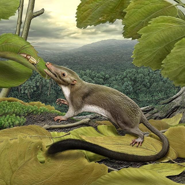 El ancestro común de todos los mamíferos