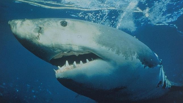 Siete personas murieron por ataques de tiburón en todo el mundo en 2012