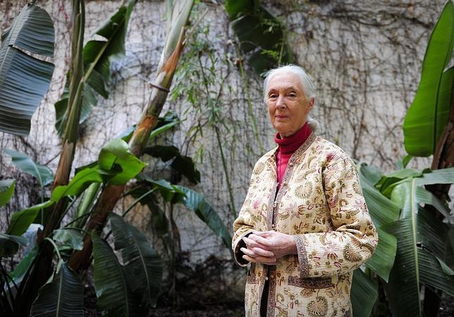 Jane Goodall: «Cuando un joven recicla su móvil salva a un chimpancé»