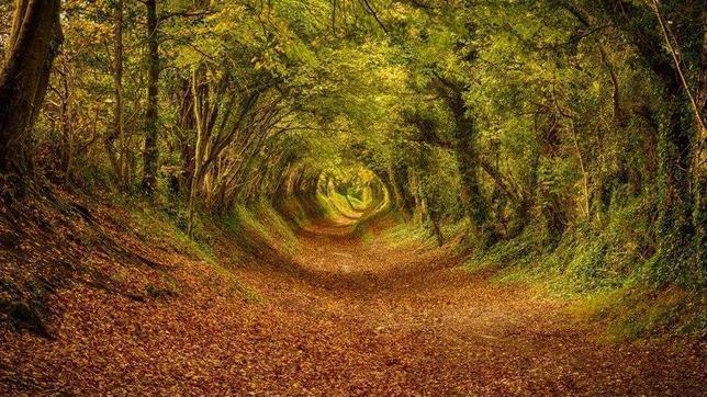 Fotografías Halnaker-England--644x362