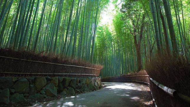 Fotografías Sagano-Bamboo-Forest--644x362