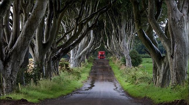 Los túneles de árboles más extraordinarios del mundo