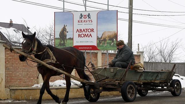 Los caballos del Este alimentan las hamburguesas europeas