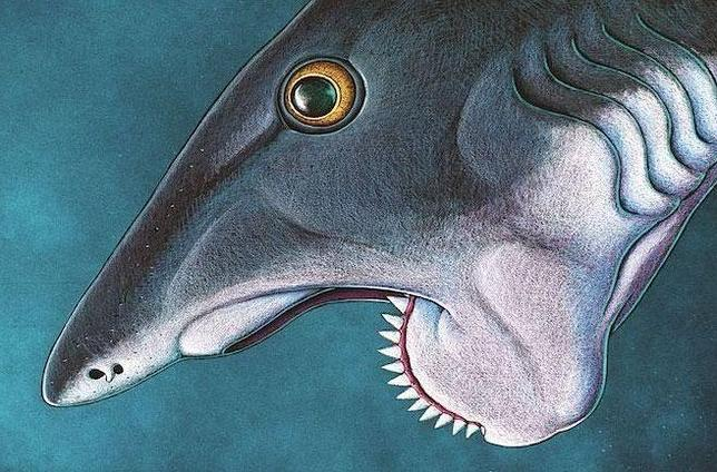 El «tiburón» que serraba a sus presas