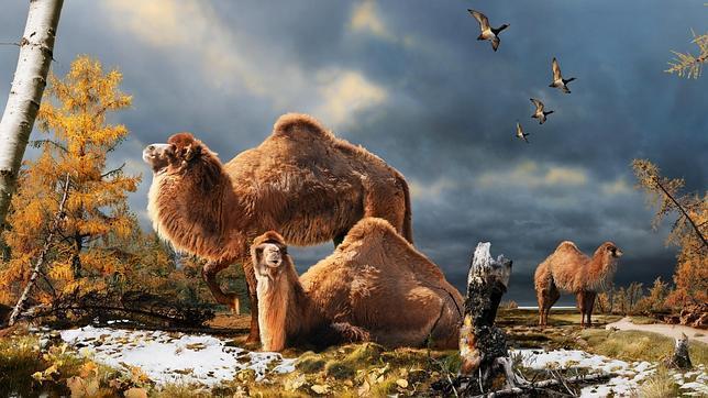 Hubo camellos en el Ártico