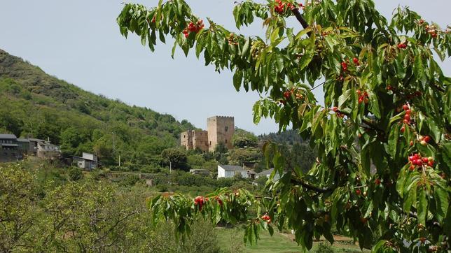 Los mejores lugares de España para ver cerezos en flor