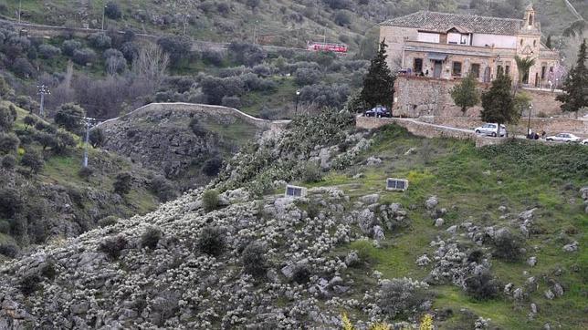 El PP pide al Ayuntamiento que actúe ante la invasión de un cactus por el Valle