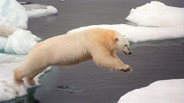 Canadá ha vetado la protección del oso polar