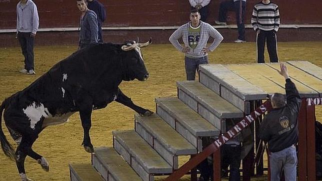 Muere «Ratón», el toro asesino