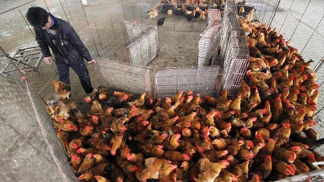 La FAO pide «fuertes medidas» para controlar la nueva gripe aviar en China