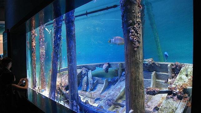 as es el acuario ms grande del mundo