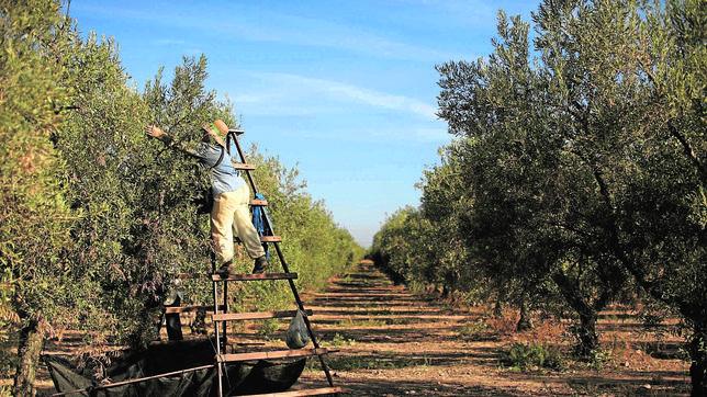 El campo español exporta calidad