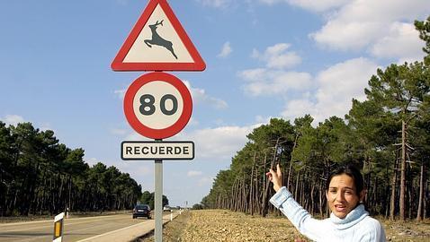 Los animales provocaron más de 6.000 accidentes de tráfico en 2012