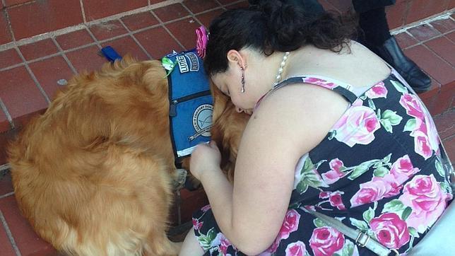 Los perros consuelan a los supervivientes en Boston