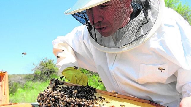 Las picaduras de avispas y abejas causan veinte muertes al año en España
