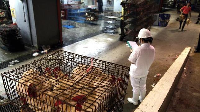 Cinco casos más de gripe aviar elevan a 23 el balance oficial de muertes en China