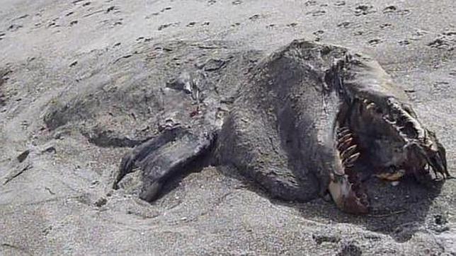 El misterioso «monstruo» de la playa de Nueva Zelanda