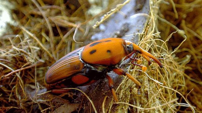 Los diez insectos más comestibles