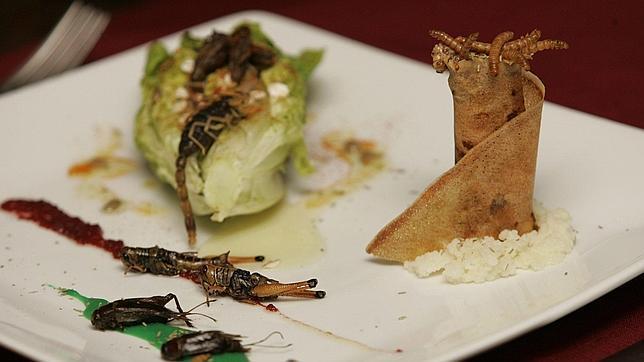 La cocina de insectos, una fuente de proteínas
