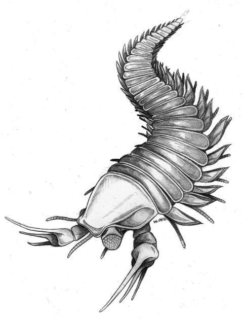 La criatura «Johnny Depp» con garras como tijeras