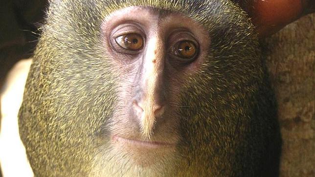 «Top 10» de las especies más impactantes del año