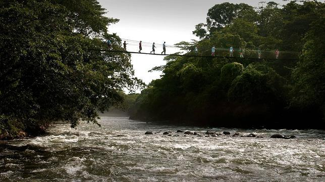 Un puente que provoca vértigo en la Reserva Biológica Tirimbina