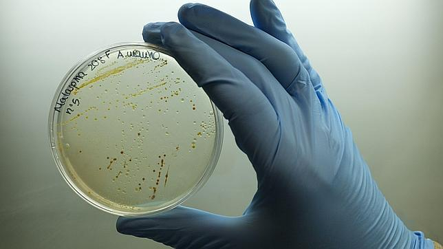 La expedición Malaspina descubre millones de genes desconocidos en el fondo marino