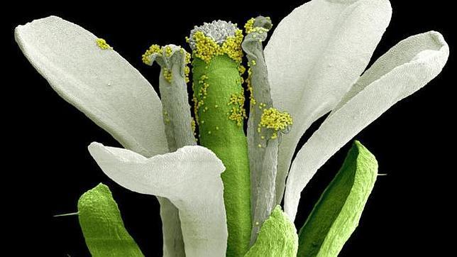 Las «matemáticas» nocturnas de las plantas