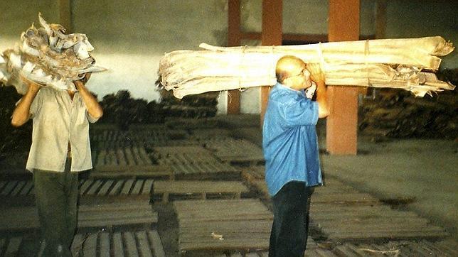 Valdés (dcha) fue castigado a recoger yaguas entre 1996 y 2006 por dirigir «Vitral»