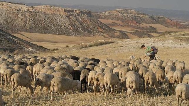 Pastores por un día y otras siete grandes ideas de agroturismo