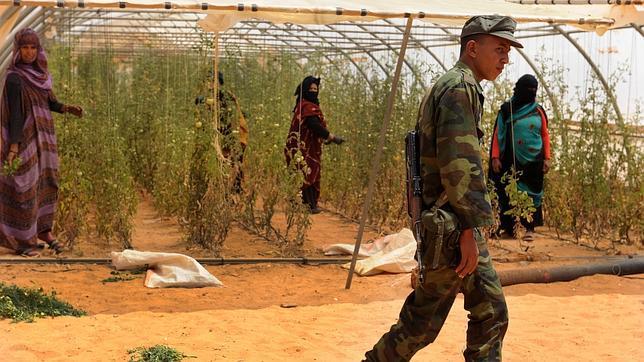 Once miembros del Frente Polisario, en búsqueda y captura