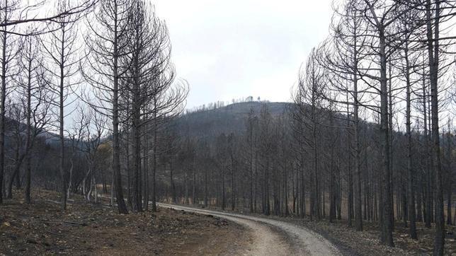El antes y el después del incendio que arrasó Alcublas