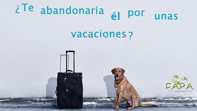 Cada 3 minutos se abandona un animal de compañía en España