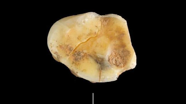 Encuentran en Valdavara el fósil humano más antiguo descubierto en Galicia