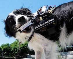 Desarrollan un dispositivo para mejorar la comunicación entre perros y humanos
