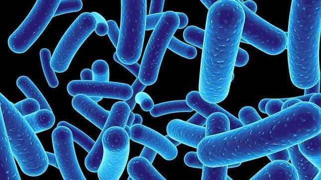 Descubren 200 microbios desconocidos que conviven con nosotros ...