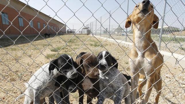 Presentan una ILP para que los animales abandonados no sean sacrificados