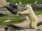 El deshielo del Ártico nos podría salir caro