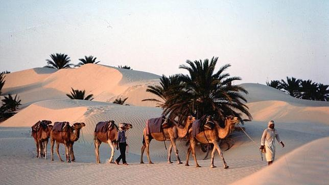 Reverdecer el desierto con agua salada