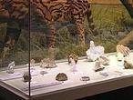 Exponen en Elche fragmentos inéditos de meteoritos de China, Namibia y Bielorrusia